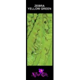 Luxury Shell Wrap Zebra Yellow Green