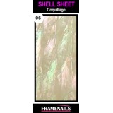 Shell Sheet no6 Coquillage