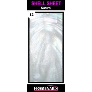 Shell Sheet no12 Natural
